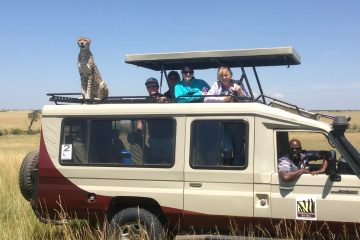 A cheetah on an Odyssey Safaris Toyota Landcruiser