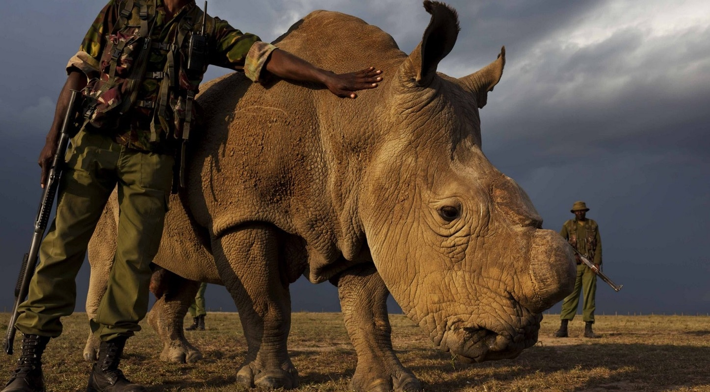 The Last Male Northern White Rhino