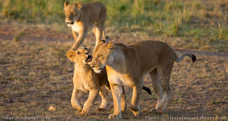 Best Places To Visit In Africa - Masai Mara National Reserve