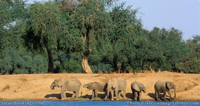 Best Places To Visit In Africa - Mana Pools National Park