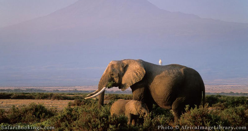 Best Places To Visit In Africa - Amboseli National Park