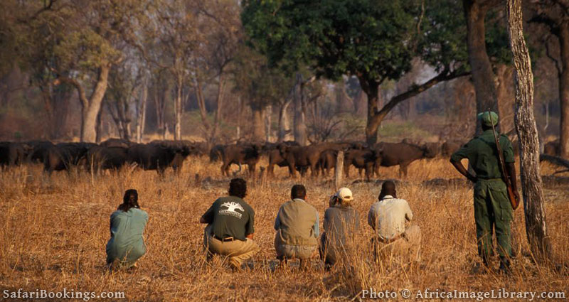 Best Places To Visit In Africa - South Luangwa National Park