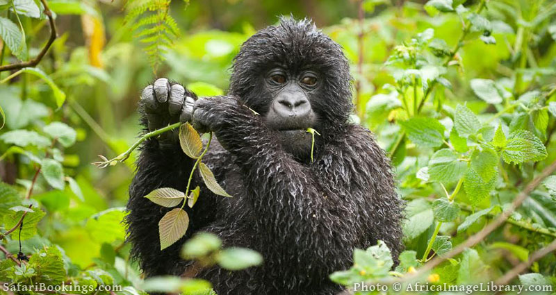Best Places To Visit In Africa - Bwindi Impenetrable National Park