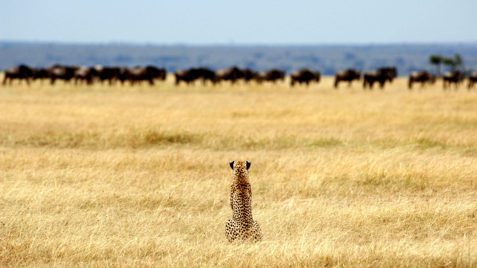 What Experiences Can You Expect on Your First Safari?