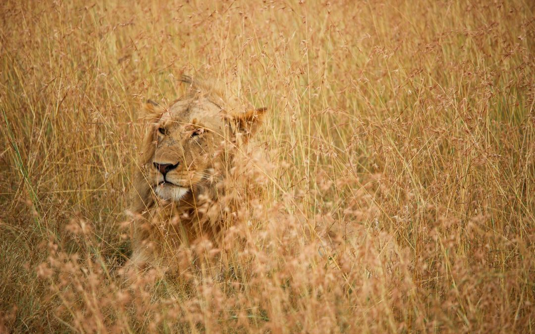 Planning The Perfect Masai Mara Safari