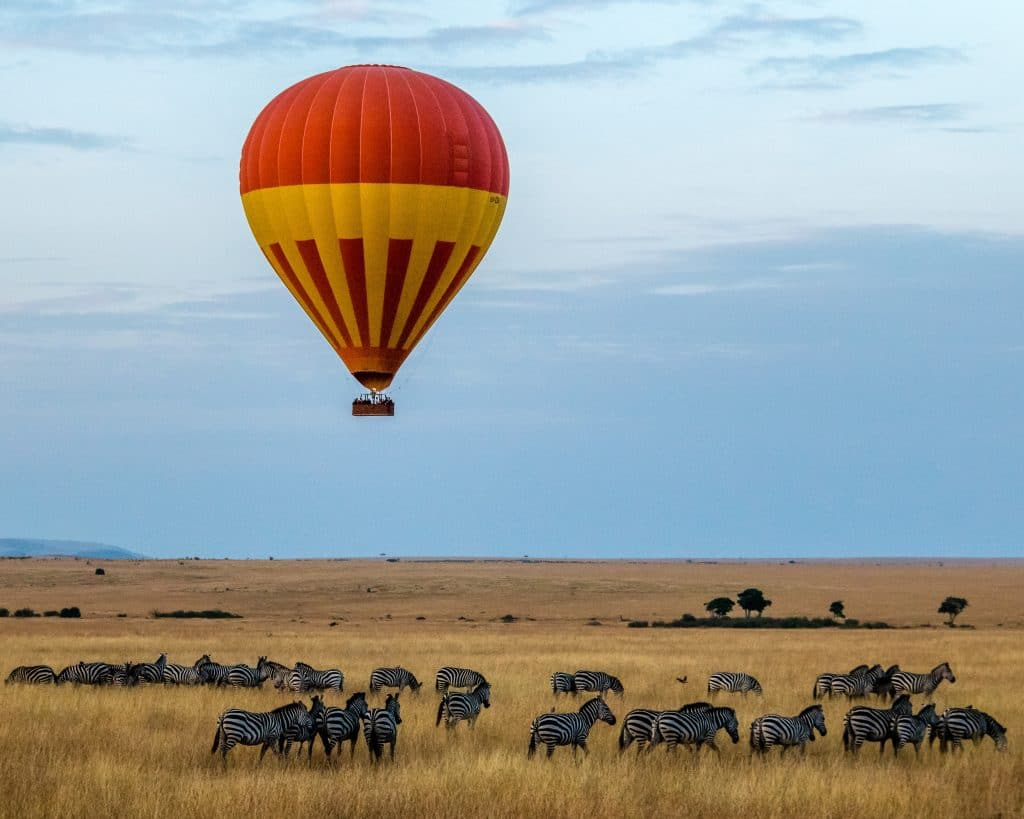 A lone hot air balloon over a herd of zebras.