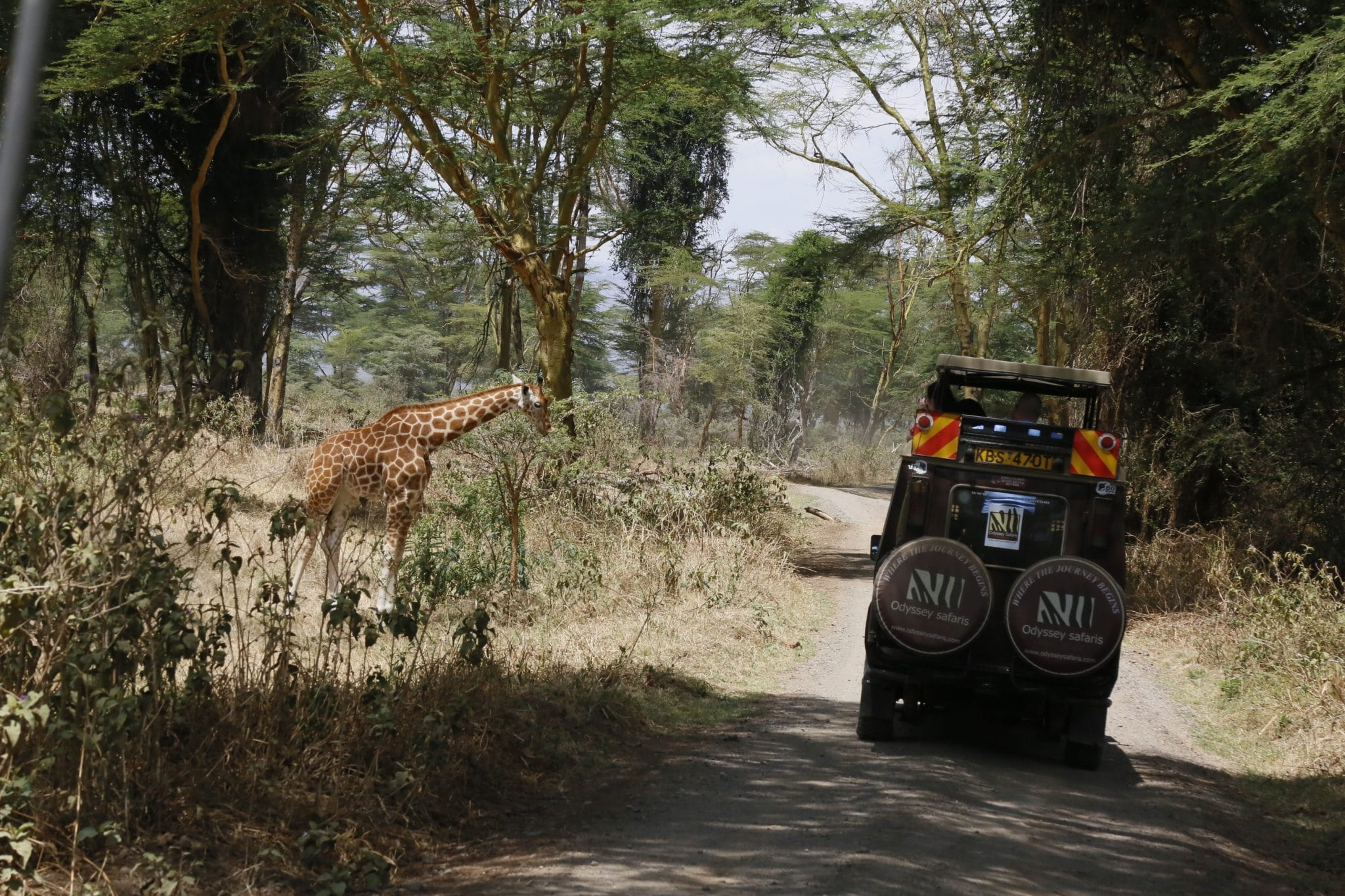 The Best Safari Parks in Kenya