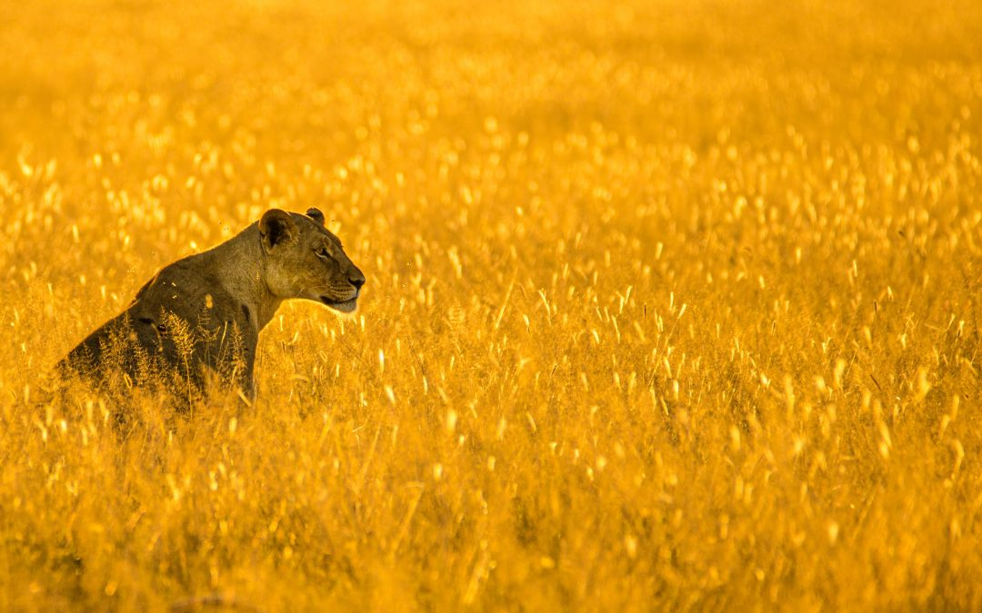 African Safari Tours Offer A Special Experience