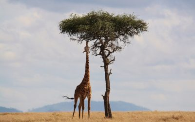 Top 10 National Parks and Reserves in Kenya