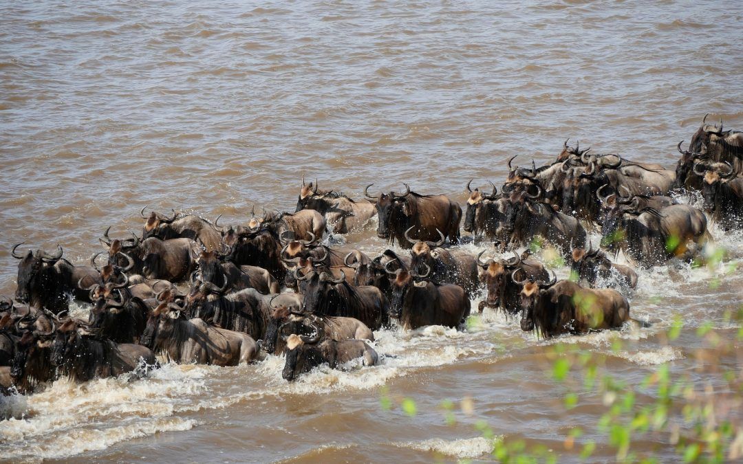 Everything You Need to Know About the Great Migration in Kenya and Tanzania